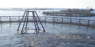 La consejera de Agricultura y Pesca anuncia nuevas ayudas por valor de 685.000 euros a la acuicultura andaluza afectada por la Covid-19.