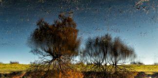 Fotografía titulada Noche y día en la Laguna de la Algaida, del isleño José Manuel García Lanceta, la más votada entre las finalistas de la XIII edición del Concurso de Fotografías del Día Mundial de los Humedales.