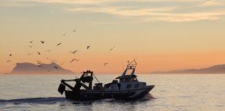 Respaldan las paradas temporales para la recuperación de los caladeros de la flota de cerco y arrastre
