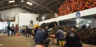 La almadraba de Conil inicia su temporada con los trabajos de tierra