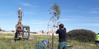 Plantan 180 pinos piñoneros en el parque de la Rana Verde de Chiclana