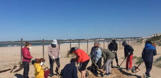 Voluntarios de la playa de Levante en El Puerto retiran 1.890 kilos de uña de gato y basura