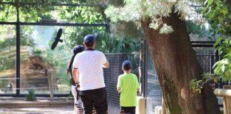 Cerrados el Zoobotánico y parques públicos de Jerez debido al fuerte viento