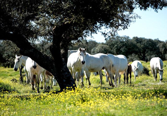 Convocan ayudas por 18,1 millones de euros para el viñedo y equino de cría, afectados por la COVID-19