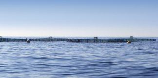 Convocadas las ayudas a la acuicultura por las pérdidas de la pandemia